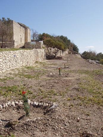 plantation_oliviers13_web.jpg
