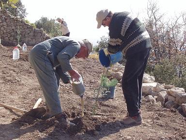 plantation_oliviers_web.jpg